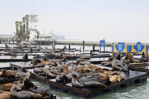 USA, California, San Francisco, sea lions in harbor at Pier 39 - BRF000744