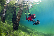 Austria, Styria, Tragoess, lake Gruener See, diver swimming over flooded meadow and beside tree trunks - YRF000064