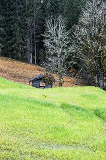 Austria, Salzburg State, Altenmarkt-Zauchensee, barn behind meadow at forest - HHF004868