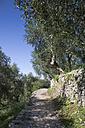 Italy, Veneto, Brenzone, olive orchard, trail near Campo di Brenzone - LVF001825
