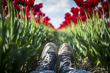 Germany, woman's feet in a red tulip field - ASCF000109