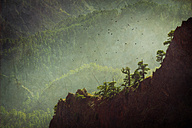 Spain, Canary Islands, La Palma, Caldera de Taburiente National Park - DWIF000198