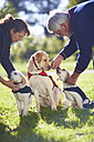 Three guide dogs at dog training - ZEF000990