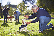 Guide dogs at dog training - ZEF000992