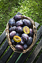 Wicker basket of plums on wooden chair in the garden - LVF001875