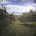 Meadow with apple tees near Tuebingen, Germany - LVF001901