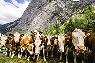 Austria, Tyrol, Karwendel mountains, Grosser Ahornboden, Cows - THA000714