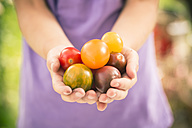 Germany, girl holding heirloom tomatoes - SARF000854
