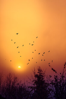 Silhouettes of birds flying in front of morning sky at sunrise - DWI000209