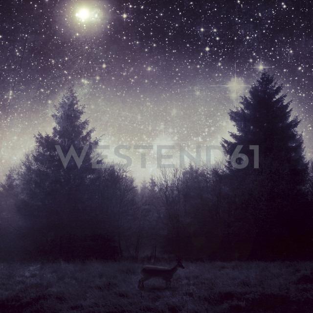 Germany, Wuppertal, Deer in front of trees under starry sky - DWI000205 - Dirk Wüstenhagen/Westend61