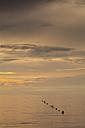 Slovenia, Istria, Slovene Littoral, Izola, Adriatic coast in the evening - WIF001102