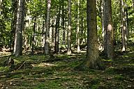 Germany, Hesse, Hirschhorn, forest - DWF000188
