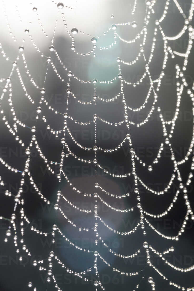 Part of cobweb with morning dew in back light - SARF000874 - Sandra Roesch/Westend61