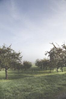 Germany, Baden-Wuerttemberg, near Tuebingen, apple trees - LVF001960