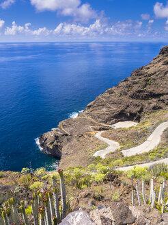 Spain, Canary Islands, La Palma, Tijarafe, Canary Island Spurge growing at rocky coast - AMF002901