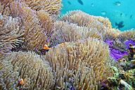 Malaysia, South China Sea, Tioman Island, Coral reef - DSGF000813