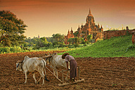 Myanmar, peasant on field in front of archaelogical site of Bagan - DSG000335