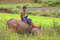 Myanmar, Kalaw, smiling teenage boy sitting on cattle - DSG000337
