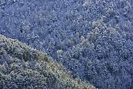 Spain, Ordesa National Park, coniferous forest - DSGF000427