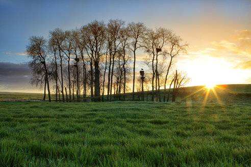 Spain, Province of Zamora, sunrise over field with white storks on trees - DSGF000816