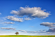 Spain, Province of Zamora, tree in the middle of a crop field - DSGF000822