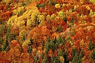 Spain, Ordesa National Park, coniferous forest in autumn - DSGF000476