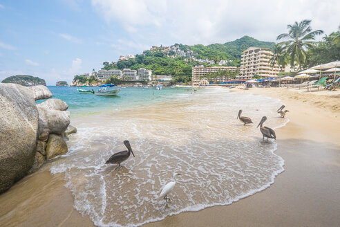 Mexico, Banderas Bay, Mismaloya Beach with Pelicans and a White Heron - ABAF001503