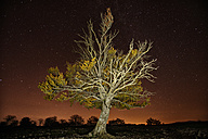 Spain, Urbasa-Andia Natural Park, Tree under starry sky at night - DSGF000691