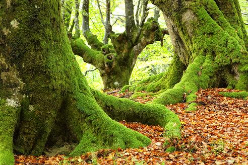 Spain, Trees at Urkiola Natural Park - DSGF000707
