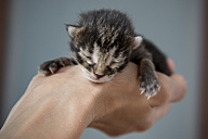 Woman's hand holding sleeping tiny kitten - SARF001178