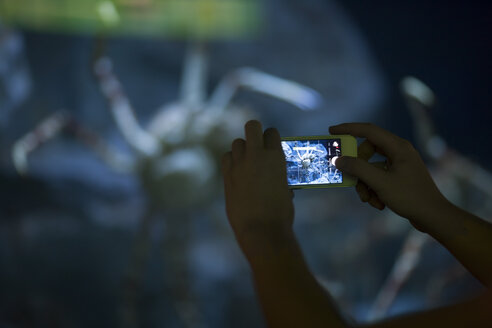 Woman's hands taking a picture with smartphone in an aquarium - ZEF001326