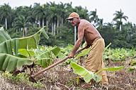 Cuba, Matanzas, Jaguey Grande, working farmer - NN000072