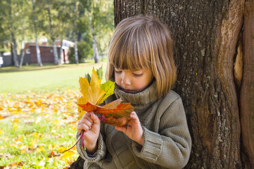 Little girl leaning at tree trunk looking at bunch of autumn leaves in her hands - LVF002011