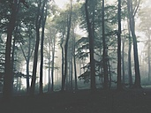 Beech forest - DWIF000248