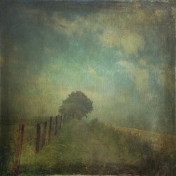 Path in fog - DWI000267