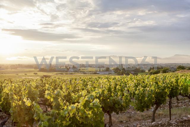 France, Villes-sur-Auzon, Vineyard - MKL000037