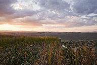 Italy, Tuscany, Siena Province, Crete Senesi, Landscape at sunset - MYF000597