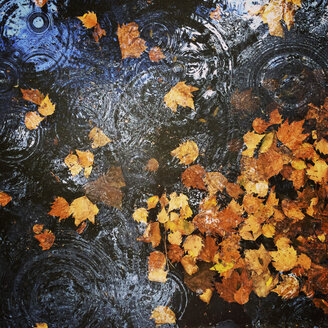 Puddle on pavement with autumn leaves - GWF003195