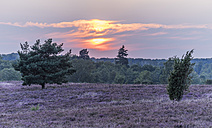 Germany, Lower Saxony, Heath district, Lueneburg Heath at sunset - PVCF000128