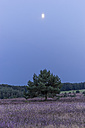 Germany, Lower Saxony, Heath district, Lueneburg Heath, evening twilight and moon - PVCF000131