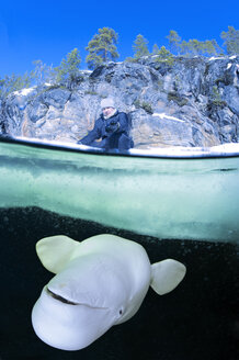 Russia, Arctic Circle Dive Centre, polar circle, man and beluga whale - GNF001315