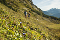 Austria, Tyrol, Tannheimer Tal, flowers growing on alpine meadow - UUF002159