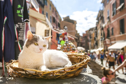 Italy, Liguria, Vernazza, one cat lying in a basket - PU000108