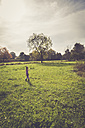Little girl with blowball walking on a meadow - SARF000935