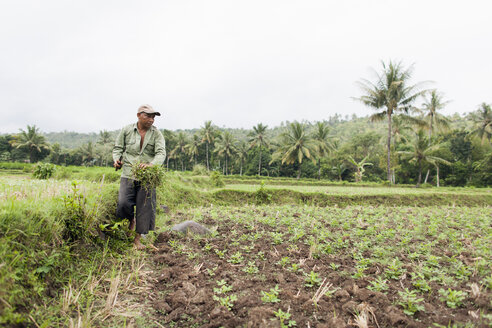 Indonesia, Lombok, man working in field - NNF000049