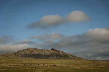 United Kingdom, England, Cornwall, Bodmin Moor, Rough Tor - PAF001031