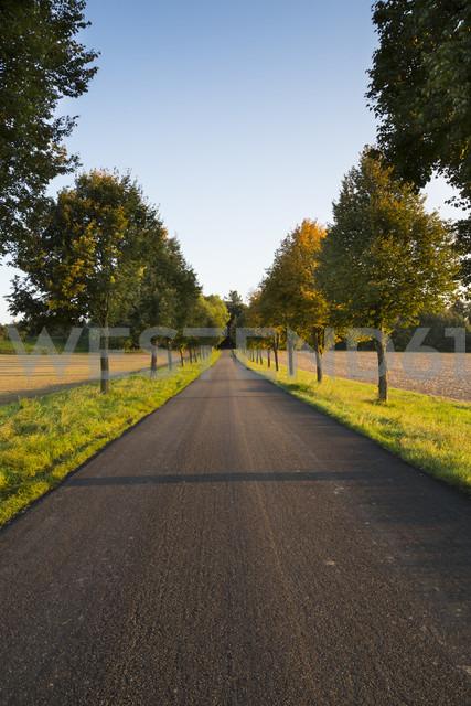 Germany, Baden-Wuerttemberg, Einsiedel, empty tree-lined road at sunlight - LVF002062 - Larissa Veronesi/Westend61