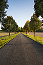 Germany, Baden-Wuerttemberg, Einsiedel, empty tree-lined road at sunlight - LVF002062