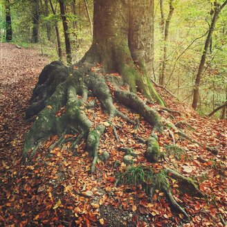 Germany, Bavaria, Hiking trail in autumnal forest between Herrsching and Andechs - GSF000896