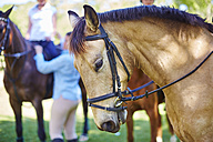 Riding horse with people in background - ZEF001745